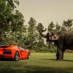 lamborghini_aventador_lp700_4_elephant_rear